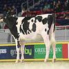 Royal16_Holstein_L32A4142