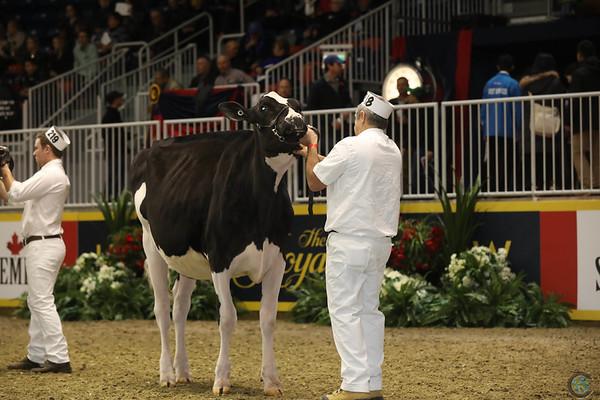 Royal16_Holstein_1M9A9937