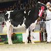 Royal16_Holstein_L32A4079