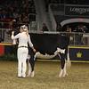 Royal16_Holstein_21M9A0055