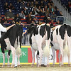 Royal16_Holstein_L32A4101