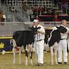Royal16_Holstein_21M9A0273