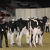 Royal16_Holstein_21M9A0352