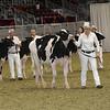 Royal16_Holstein_21M9A0289