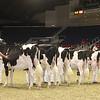 Royal16_Holstein_21M9A0105