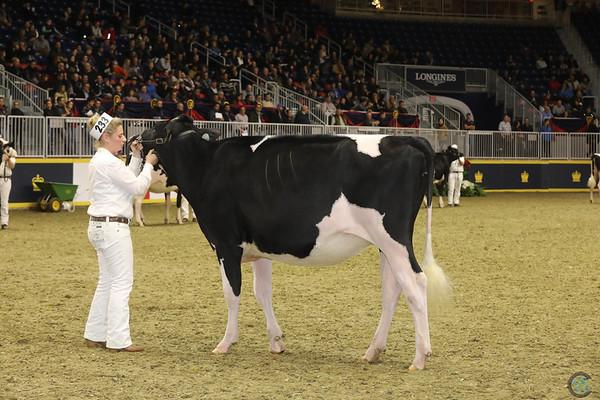 Royal16_Holstein_21M9A0071