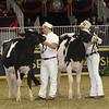Royal16_Holstein_21M9A0278