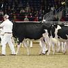 Royal16_Holstein_L32A4047