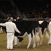 Royal16_Holstein_21M9A0029