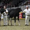 Royal16_Holstein_1M9A9982