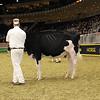 Royal16_Holstein_21M9A0080