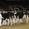 Royal16_Holstein_21M9A0030