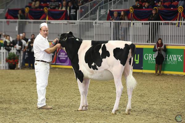 Royal16_Holstein_L32A4151