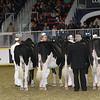 Royal16_Holstein_21M9A0033