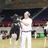 Royal16_Holstein_L32A3917