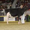 Royal16_Holstein_21M9A0321