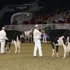 Royal16_Holstein_21M9A0040