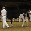 Royal16_Holstein_21M9A0001