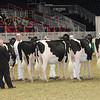 Royal16_Holstein_21M9A0100
