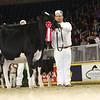 Royal16_Holstein_L32A4035