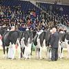 Royal16_Holstein_L32A3998