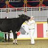 Royal16_Holstein_1M9A9951