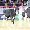 Royal16_Holstein_L32A4029