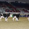 Royal16_Holstein_L32A4171
