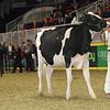 Royal16_Holstein_21M9A0145