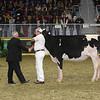 Royal16_Holstein_L32A4167