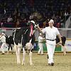Royal16_Holstein_L32A4070