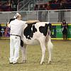 Royal16_Holstein_L32A4149