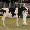 Royal16_Holstein_21M9A0304
