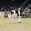 Royal16_Holstein_L32A3921
