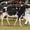 Royal16_Holstein_21M9A0146