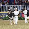 Royal16_Holstein_L32A4066