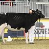 Royal16_Holstein_1M9A9941
