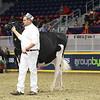 Royal16_Holstein_L32A4054