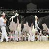 Royal16_Holstein_L32A3884