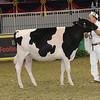Royal16_Holstein_21M9A0294