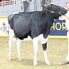 Royal16_Holstein_L32A3946