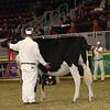 Royal16_Holstein_21M9A0049