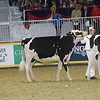 Royal16_Holstein_21M9A0155