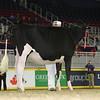 Royal16_Holstein_L32A4024