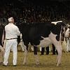 Royal16_Holstein_21M9A0009