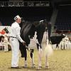 Royal16_Holstein_1M9A9935