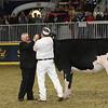 Royal16_Holstein_L32A4162