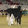 Royal16_Holstein_21M9A0336