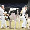 Royal16_Holstein_L32A3880