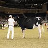 Royal16_Holstein_21M9A0072